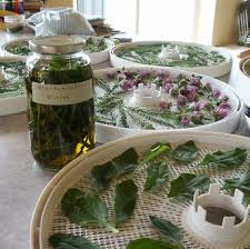 simple tips for harvesting herbs 3 easy ways to dry herbs guest
