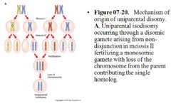 inheritance pattern quizlet achondroplasia inheritance pattern free knitting patterns