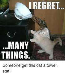 Towel Meme - i regret many things someone get this cat a towel stat meme on me me