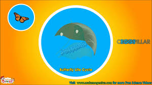 butterfly life cycle video for kids science for kids by