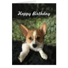 Corgi Birthday Meme - the 25 best happy birthday corgi ideas on pinterest birthday