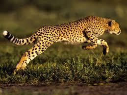 jaguar the jaguar thinglink