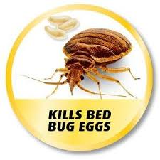 What Kills Bed Bugs And Their Eggs Amazon Com Ortho Home Defense Dual Action Bed Bug Killer Aerosol
