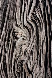 best 25 bark of tree ideas on tree bark