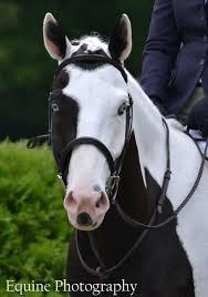 183 best horse w blue eyes u0026 color blue images on pinterest