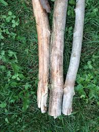 build a cheap wooden trellis that lasts