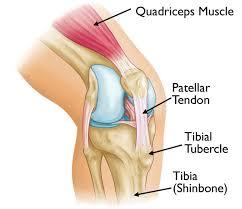 Knee Bony Anatomy Osgood Schlatter Disease Knee Pain Orthoinfo Aaos