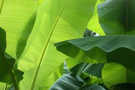 free images nature sunlight flower green tropical botany