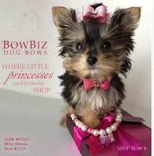 hair accessories for yorkie poos dog bows quality dog bows yorkie maltese shih tzu by bowbiz