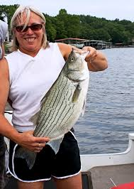 santee cooper fishing guides taylor column the lake has sea bass news the lake news online