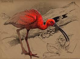 artstation scarlet ibis floris van der peet