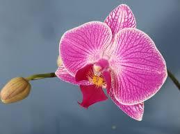 Indoor Flower Plants Best Flowering Indoor Plants New England Today