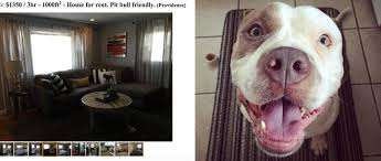 rent a pit landlord welcomes only pit bull owners to rent house