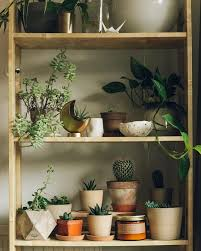447 best house plants images on pinterest plants indoor plants