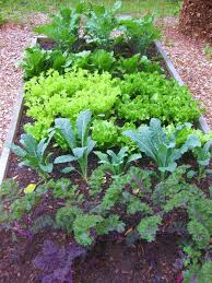 Kitchen Garden Design Ideas The Easy Kitchen Garden