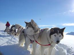 sled dogs star in tale of antarctic adventure mushing com the