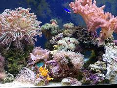 Saltwater Aquascaping Aquascaping Aquarium U2013 Beauty Is In The Eye Of The Beholder