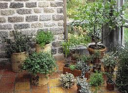 herbs indoors growing herbs indoors