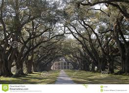 oak alley plantation house royalty free stock images image 21599