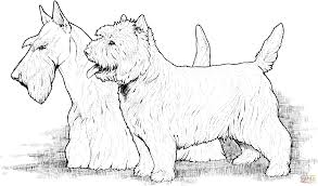 scottish and west highland terriers coloring page free printable