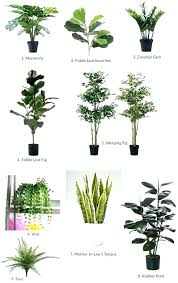 plants for office best plants for office good office plants great office plants good
