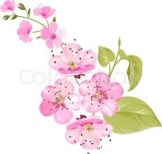 cherry blossom flowers japan cherry branch with blooming cherry blossom blossom