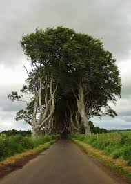 the stunning tree tunnel you saw on u0027game of thrones u0027 is real and