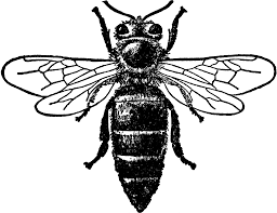 queen bee cliparts free download clip art free clip art on