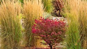 Tall Grass Landscaping by Grow Ornamental Grasses