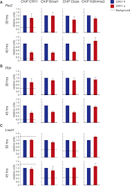 Sleep Number Bed Error E3 Mutation Of The Human Circadian Clock Gene Cry1 In Familial