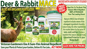 Rabbit Repellent For Gardens by Landing Page Re Sized Jpg