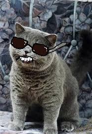 Dat Ass Cat Meme - dat cat