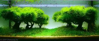 Aquascape Tree Fishes U0026 Aquariums Fish Tank Setups Get Shade Under The Tall Tree