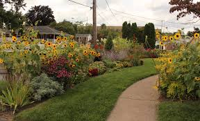 tennessee smart yards native plants august 2017 sorta like suburbia