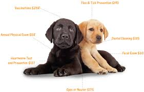 cost of a bichon frise your puppy u0027s first vet visit what to expect american kennel club