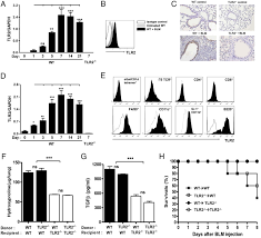 tlr2 mediated production of il 27 and chemokines by respiratory