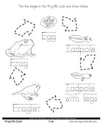 ideas about free printable science worksheets for 1st grade