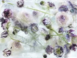 Flowers In Japanese Culture - locked in the ether photographs of flowers in thawing ice by