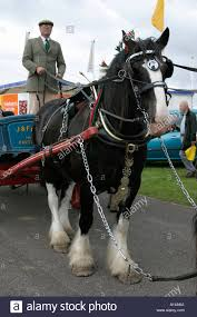 reigns carriage stock photos reigns carriage stock images alamy