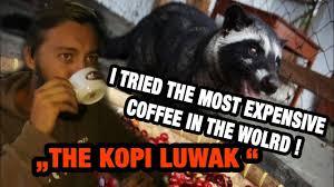 vietnam 3 basically i drink weasel poop the kopi luwak coffee