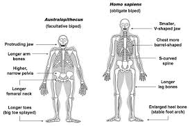 Wood Joints Worksheet by Human Evolution Ncea Biology