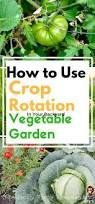 how to use crop rotation in your backyard vegetable garden