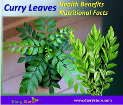Curry Leaf Plant Diseases - curry leaves health benefits nutritional facts rutaceae family