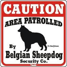 belgian sheepdog newsletter belgian sheepdog caution dog sign ebay