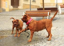 30 best dog friendly destinations in the northeast best rv reviews