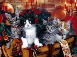kitten wallpapers wallpapers high definition