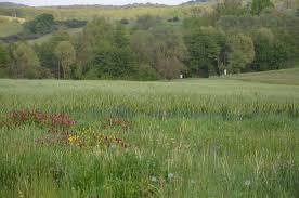 landwirtschaftliche fläche kaufen steigende preise für landwirtschaftliche grundstücke bw