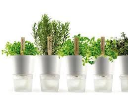 design blumentopf wohnen mit pflanzen cleveres design für zimmerpflanzen schöner
