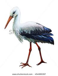 stork stock images royalty free images u0026 vectors shutterstock