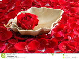 Rose Flower Images Red Rose Flower Petals Spa Aromatherapy Royalty Free Stock Image